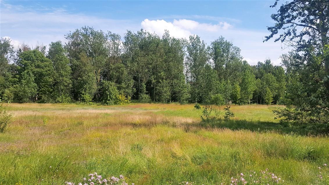(Latviešu) Pārdod zemi Laumas rajonā, Liepāja. ID:205